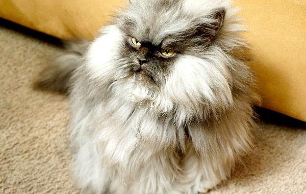 Colonel_Meow
