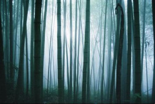 Forêt hantée