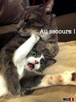 Aidez ce chat !