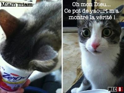 Le chat qui vient d'avoir une révélation