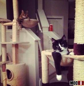 La belle vie pour ces chats qui se prélassent !