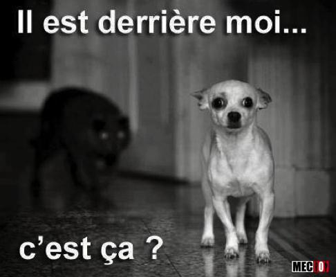 Ce chien se doute de quelque chose...
