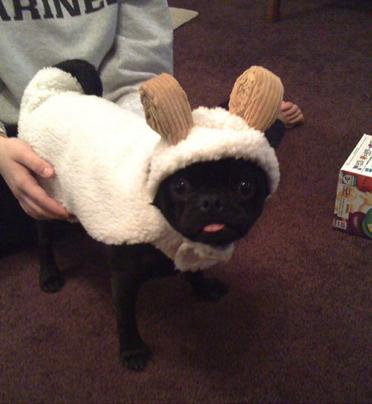 Un autre chien déguisé, adorable !