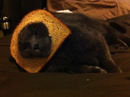 Chat déguisé avec un toast