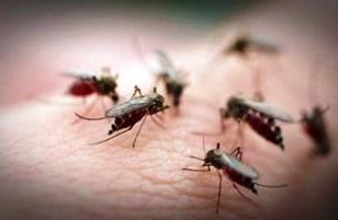 Des insectes envahisseurs pendant le dîner de Noël
