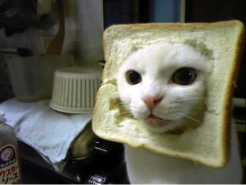 Ce chat semble apprécier sa tenue, non ?