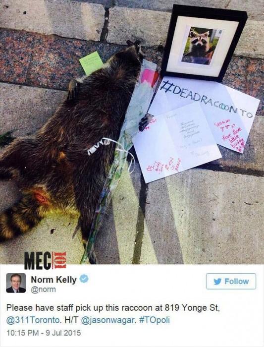 animal mort sur le trottoir